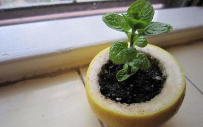Φτάξτε αυτές τις έξυπνες κατασκευές για τον κήπο σας χωρίς να ξοδέψετε ούτε 1 ευρώ!