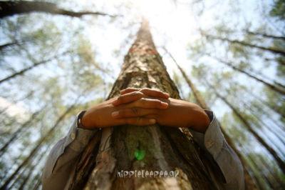 Το αγκάλισμα των δέντρων μπορεί να βοηθήσει την υγεία του ανθρώπου