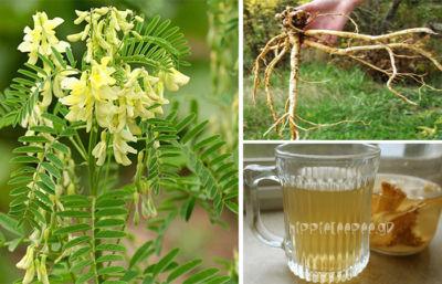 Astragalus - Το Βότανο που Καταπολεμά τον Καρκίνο & τον Διαβήτη Τύπου 2,Σταματά τη Γήρανση και Επιδιορθώνει το DNA