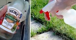 9 Λόγοι για να Χρησιμοποιείτε Λευκό Ξύδι στον Κήπο σας