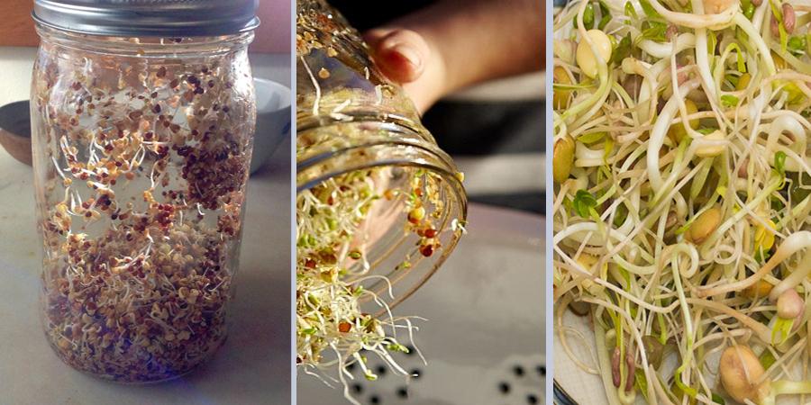 Φύτρα: Γιατί Πρέπει να τα Τρώτε & πως να τα Καλλιεργήσετε