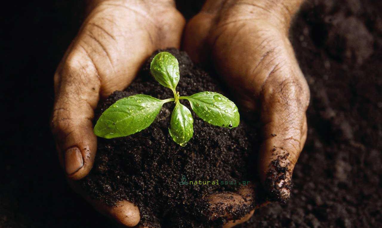 Κηπουρική: Ασχοληθείτε με τον Κήπο σας μία ώρα Κάθε Μέρα και Αντιμετωπίστε την Κατάθλιψη