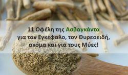 11 Οφέλη της Ασβαγκάντα για τον Εγκέφαλο, τον Θυρεοειδή, ακόμα και για τους Μύες!