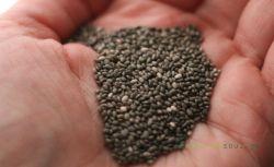 Οφέλη των Σπόρων Τσία: Μια Υπερτροφή Γεμάτη Ωμέγα-3 και Πρωτεΐνες.