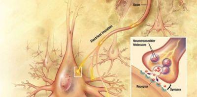 Πώς να υπερφορτώσετε τα επίπεδα ντοπαμίνης και να μην ξανανιώσετε καταθλιπτικοί ή αγχωμένοι