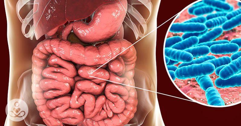 Μάθετε πως τα Βακτήρια στο Έντερο Επηρεάζουν το Μυαλό μας!