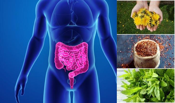 7 Βότανα που Ανακουφίζουν από τη Δυσκοιλιότητα!
