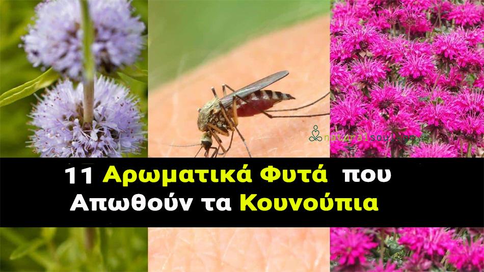 11 Αρωματικά Φυτά που Απωθούν τα Κουνούπια!!