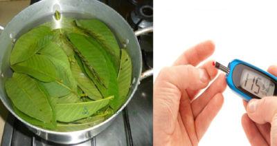 Βράστε Φύλλα Μάνγκο για την Καταπολέμηση του Διαβήτη!