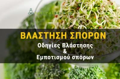 Βλάστηση σπόρων (Φύτρα): Ένας οδηγός για Βλάστηση Σπόρων στην Κουζίνα μας!