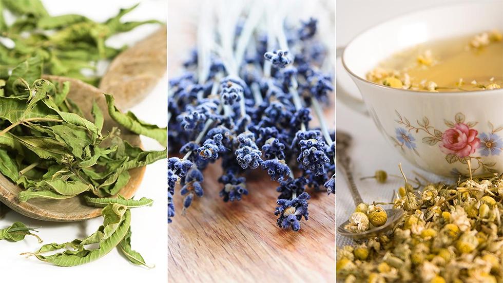 Το Άγχος μας Παχαίνει, μας Αρρωσταίνει και μας Προκαλεί Ξατάθλιψη…Ας το Καταπολεμήσουμε με αυτά τα 10 Βότανα που Λειτουργούν Καλύτερα από Φάρμακα!