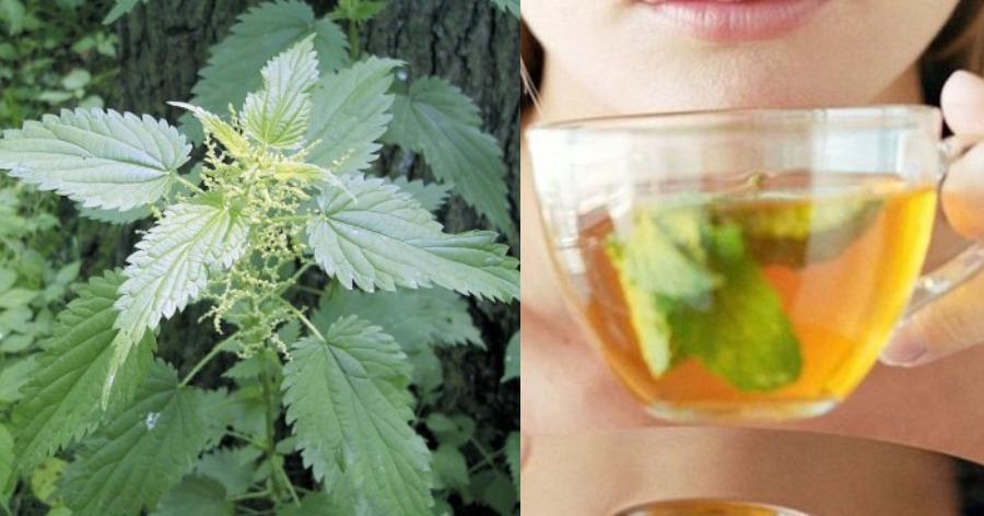 8 Οφέλη της Τσουκνίδας (& συνταγές για ρόφημα τσουκνίδας, τόνωτικό ποτό, δυναμωτικό για τα μαλλιά κ.α.)